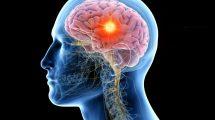 Alcohol Affect Brain