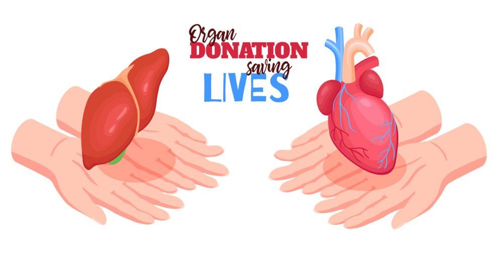 Liver Donation